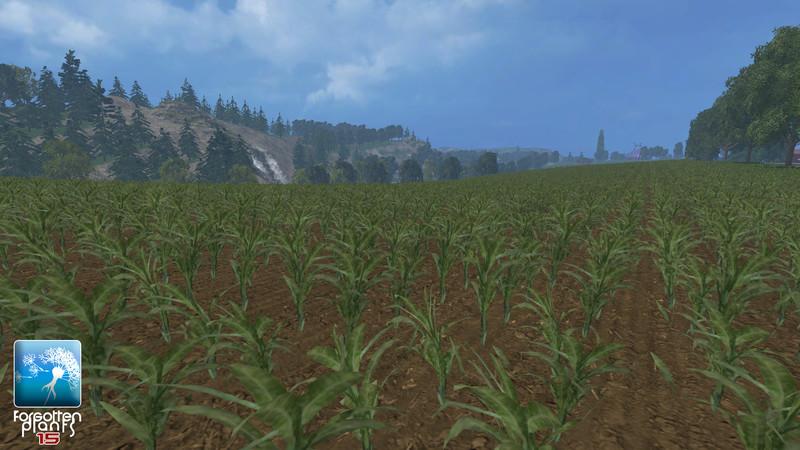 forgotten-plants-maize--2d