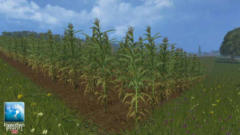 forgotten-plants-maize--2f