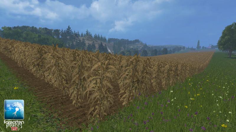 forgotten-plants-maize--2g