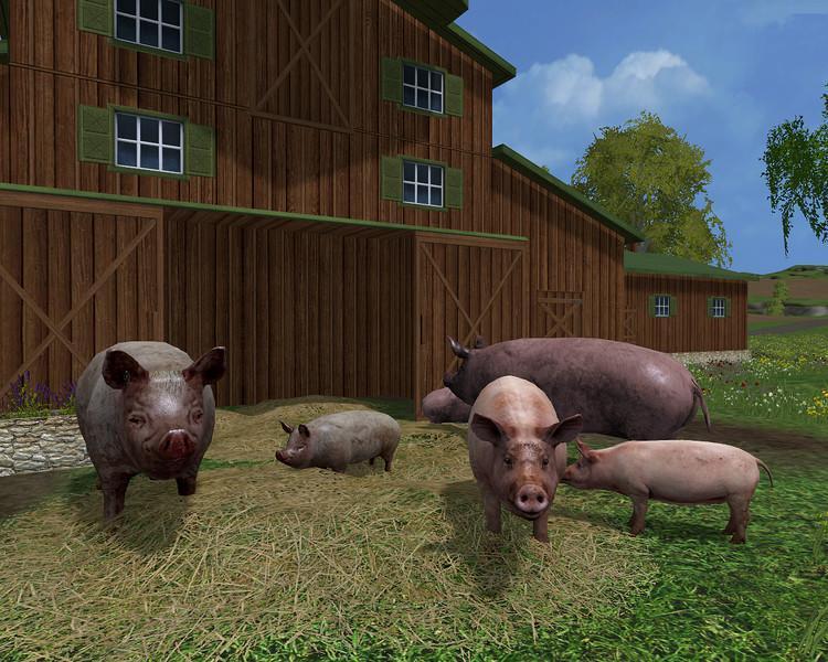1449235830_grunting-pigs-v1-0_1