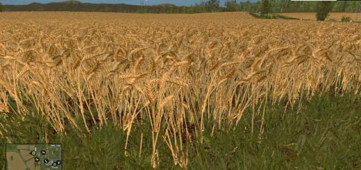 wheat-barley-real-texture_1.png
