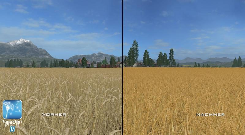 4749-forgotten-plants-wheat-barley-v1-0_8