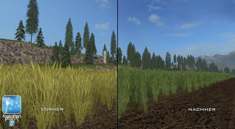 4749-forgotten-plants-wheat-barley-v1-0_9