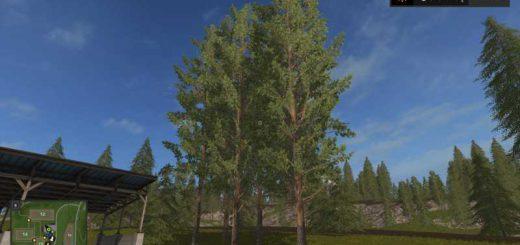 tall-pine-trees-v1-0_1