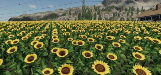 forgotten-plants-sunflowercanola-v1-0_1