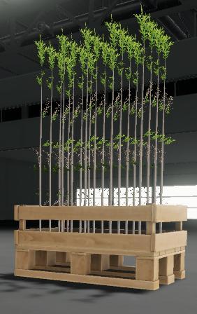 tree-saplings-1-0-0-0_2