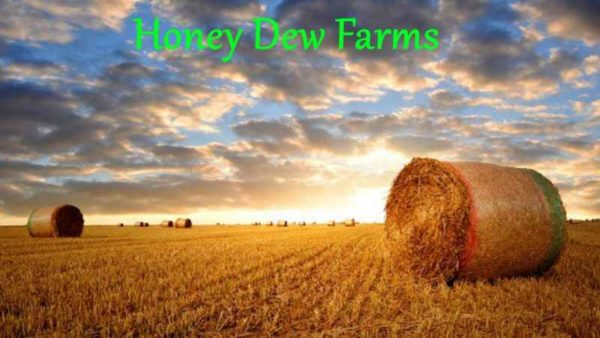 4924-honey-dew-farms-1-0-0-1_1
