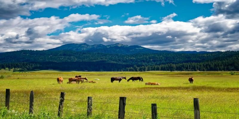 country-fields-v1-1_1