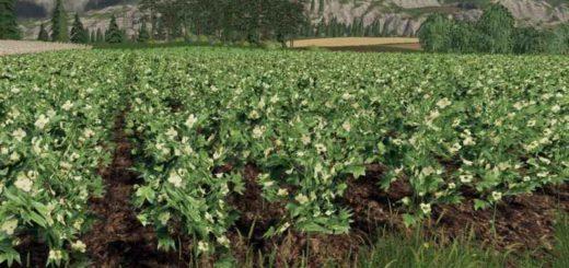 forgotten-plants-cotton-v1-0-0_3