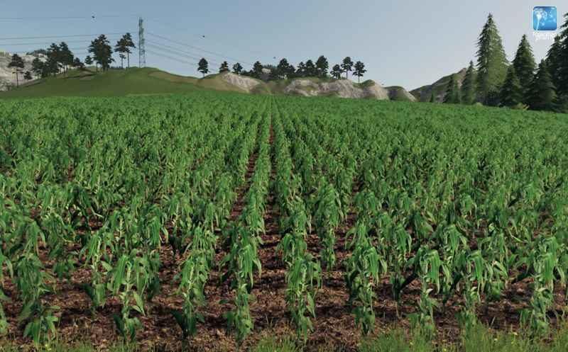 forgotten-plants-maize-v1-0-0_1