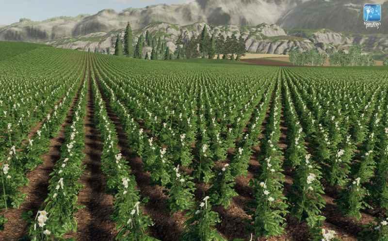 forgotten-plants-potato-sugarbeet-oilseed-radish-v1-0_1