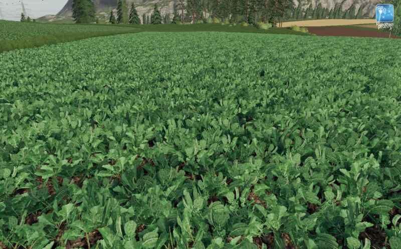 forgotten-plants-potato-sugarbeet-oilseed-radish-v1-0_5
