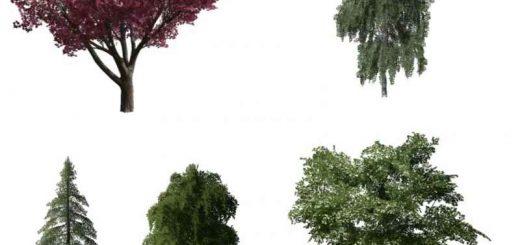 more-trees-v1-0-0-0_1