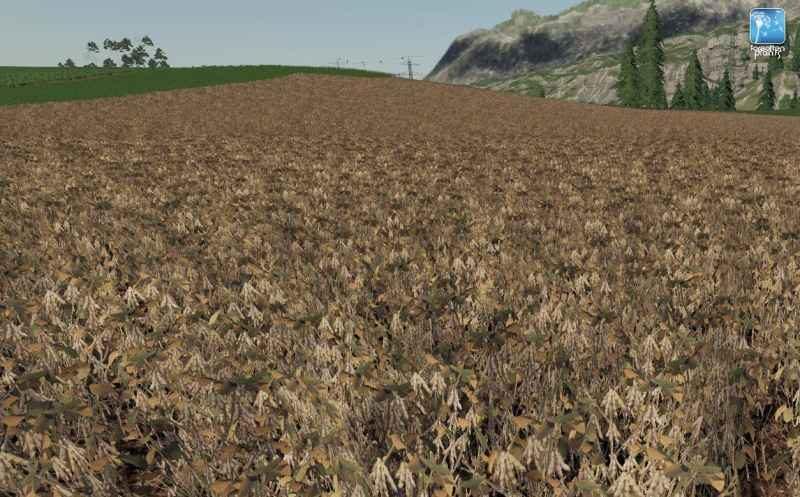 1179-forgotten-plants-soybean-v1-0_5