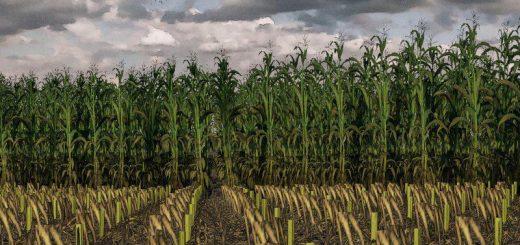 maize-texture-v1-0-0-0_1